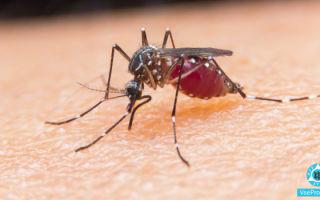 Укус комара: как снять зуд и отёк, домашние и аптечные средства