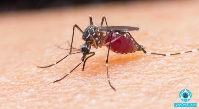 укуса комара